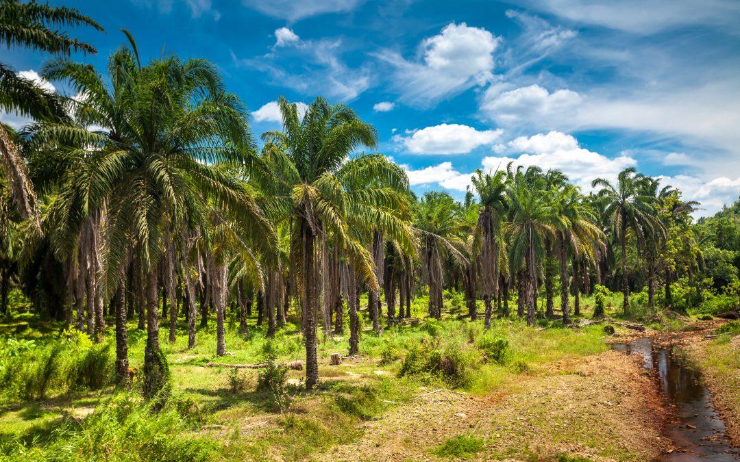 Accordo tra Indonesia e Svizzera per l'importazione dell'olio di Palma